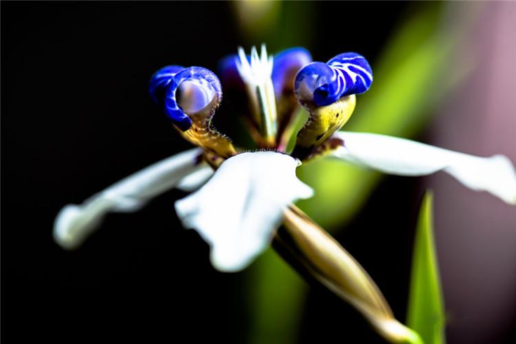 这是什么兰花