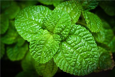 梅雨植物更要通风,病害植物易招蚊虫
