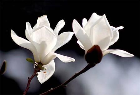 28、云南八大名花 山茶、玉兰、杜鹃、报春、百合、兰花、绿绒蒿、龙胆。