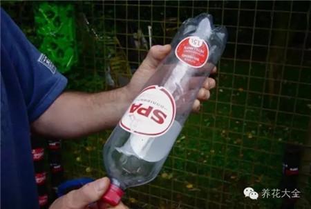 8个塑料瓶就能拥有一个立体菜园