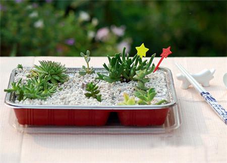 夏季能给花施肥吗?