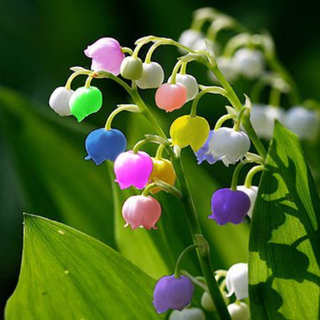 植物红掌怎么养_铃兰种类及图片 - 花百科