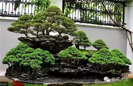 丛林式盆景图片
