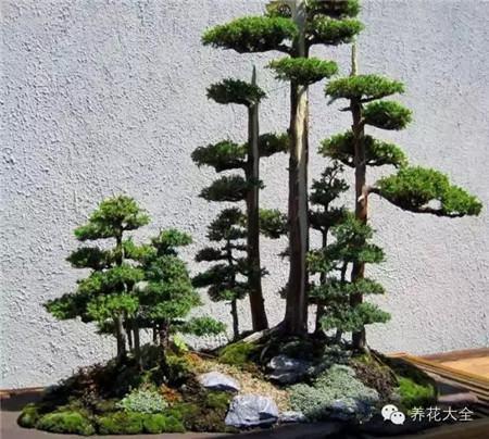 丛林式的盆景艺术美图