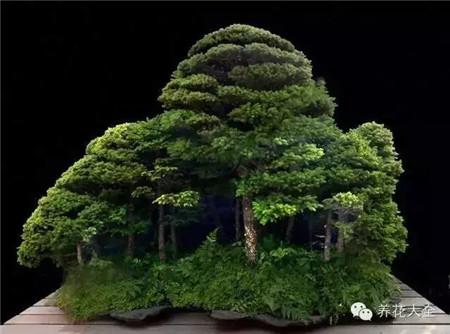 丛林式的盆景美图