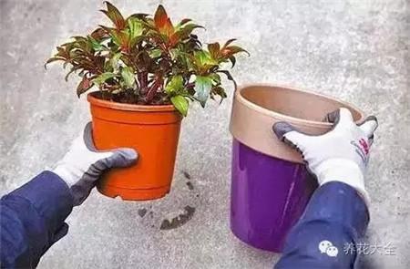选择相应口径的花盆
