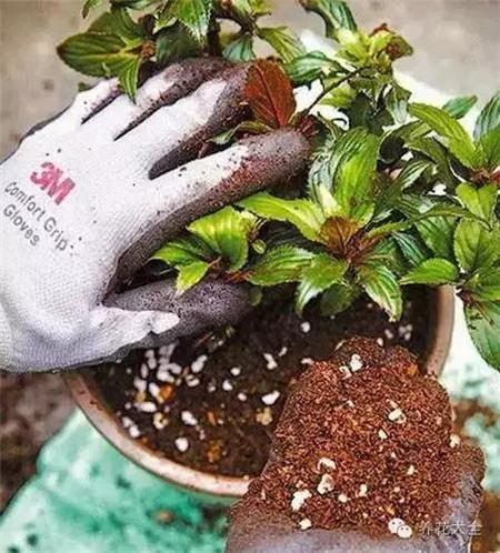 正确地栽植花木
