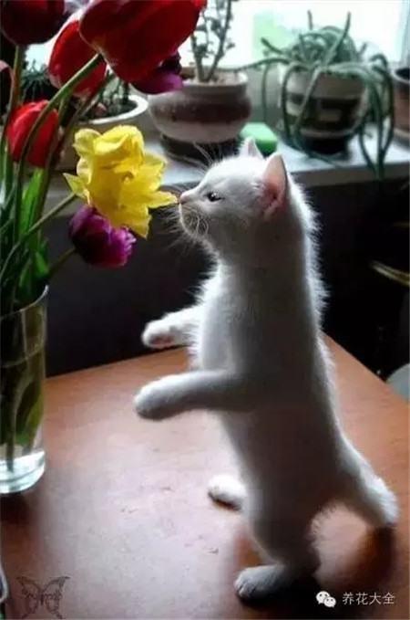 这花香~好闻到飞起来~~