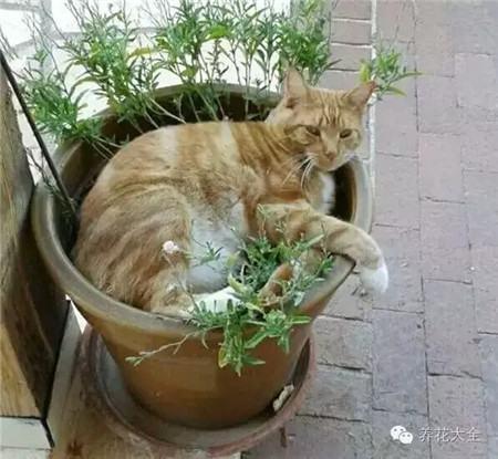 这花盆被我承包了,别打它注意啦!