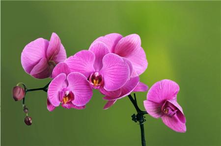 秋天的花——蝴蝶兰