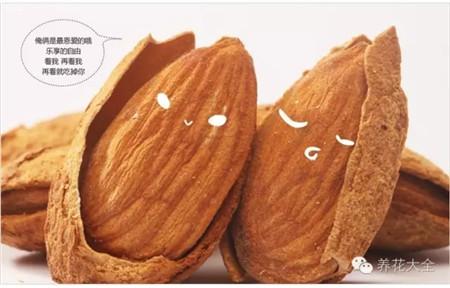平时吃的美国大杏仁