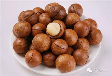 平时吃的澳洲坚果