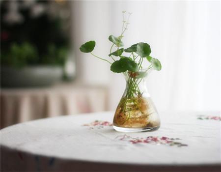 水培植物有什么优点