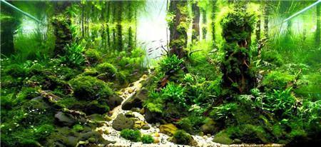 水草鱼缸美景
