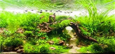 水草鱼缸景观图片