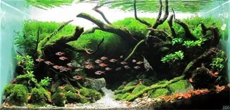 水草鱼缸景观美图