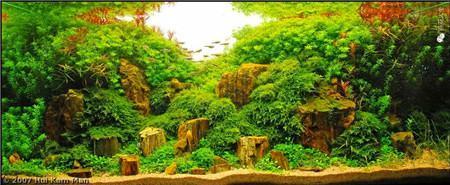 水草鱼缸美景图片