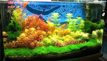 水草鱼缸景观欣赏
