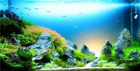 水草鱼缸美景美图欣赏