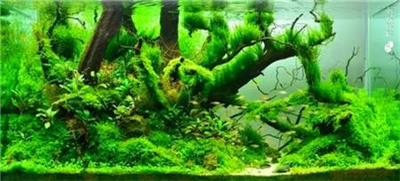 水草鱼缸美图欣赏