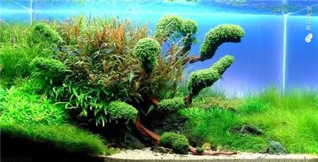 水草鱼缸图片欣赏