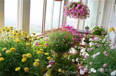 封闭阳台、室内窗台也能打造超美花园