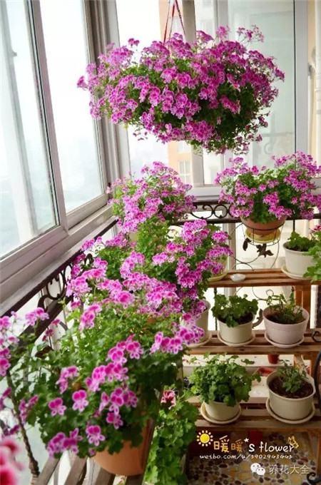 深蓝深紫豆豆的室内花园