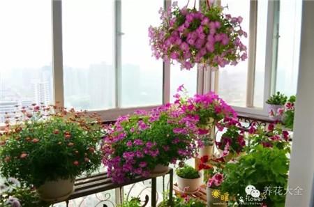 衣架把植物吊起来