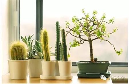 种绿植净化空气