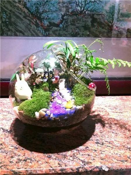 苔藓微景观