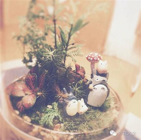 苔藓微景观图片