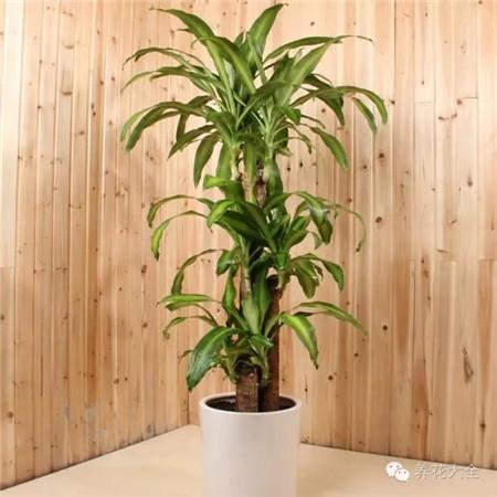 大型植物配土