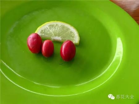 神秘果果实