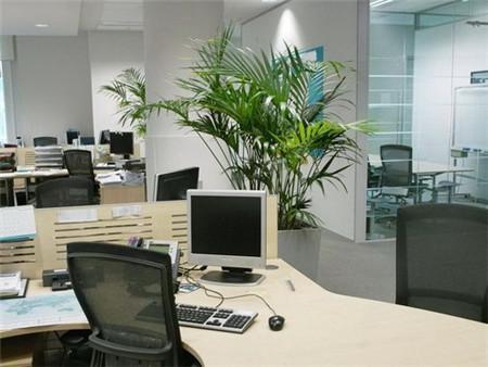 办公室植物发黄的原因