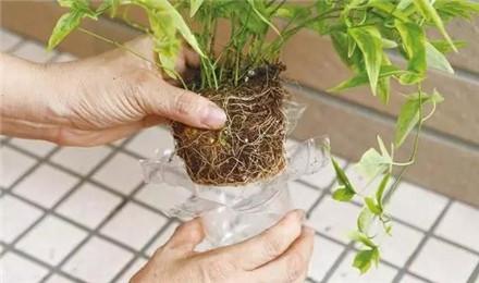 塑料瓶做成的两个花盆