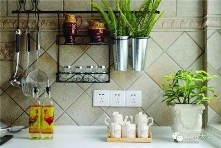 厨房植物的摆放位置