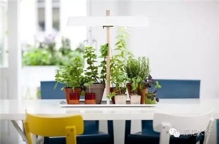 厨房植物的注意事项