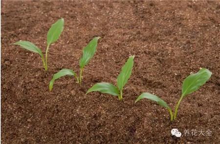 如何选择栽培土壤
