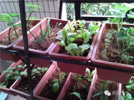 如何维持好种菜时的湿度温度