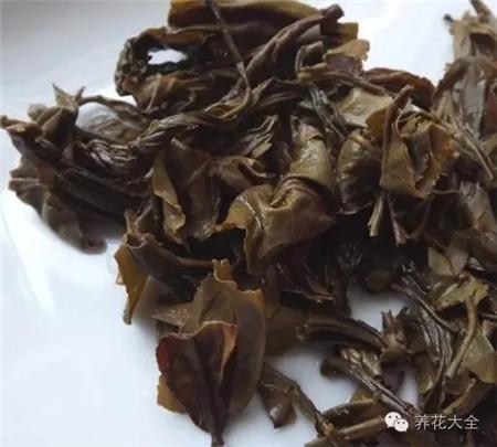 喝剩的茶叶沤肥
