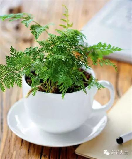 咖啡杯花器
