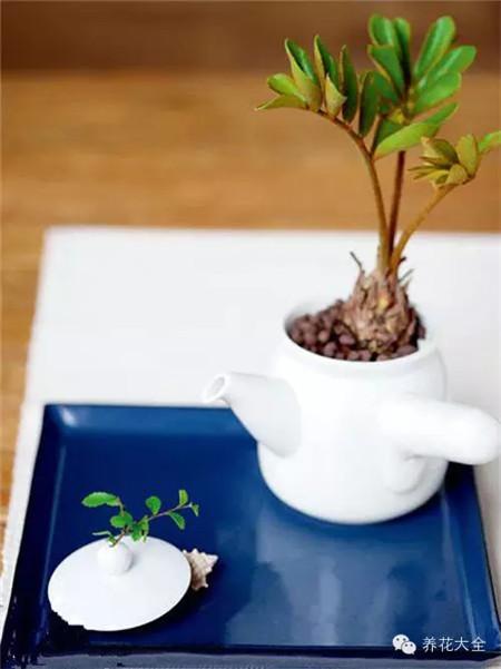 沏一壶绿茶