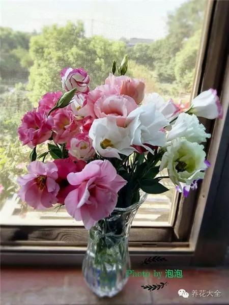 洋桔梗插花