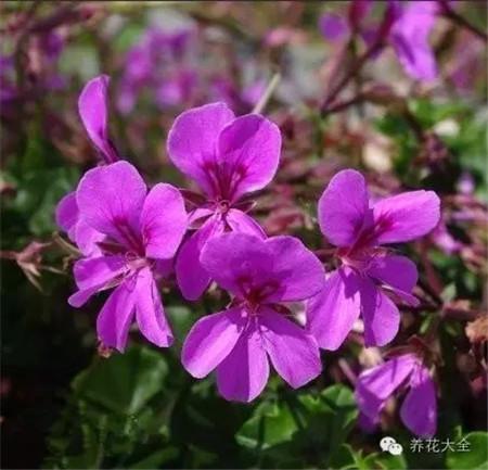 o丁香紫色