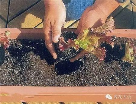 在土壤上挖小洞