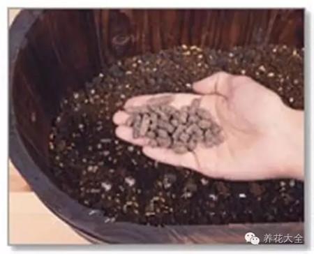 倒入蔬菜用培养土