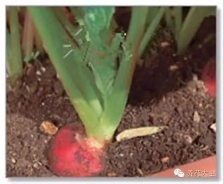 施予液态肥料