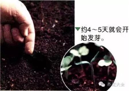A、点播种子