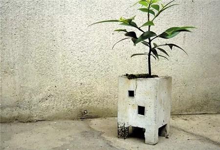 很有诗意的盆栽