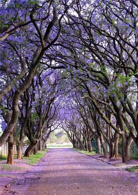 南非比勒陀利亚